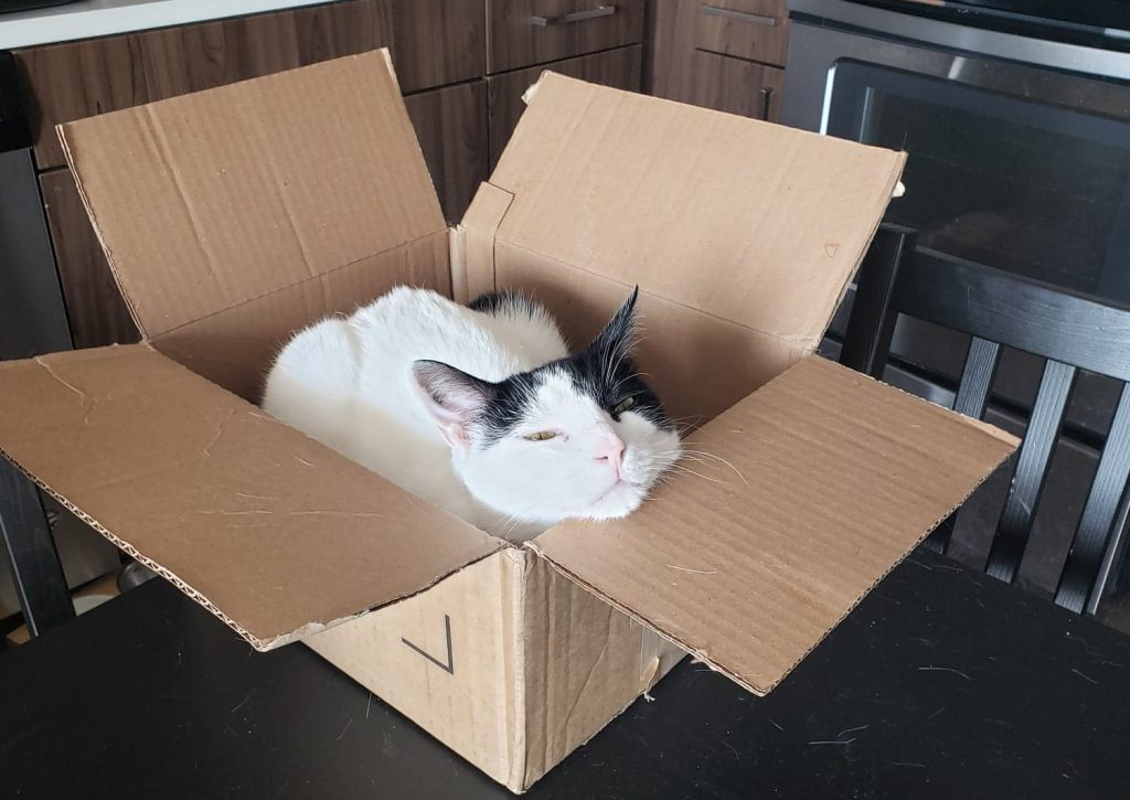 Echo in a box