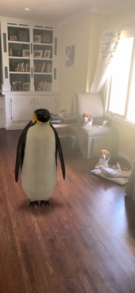 Penguin next to dogs