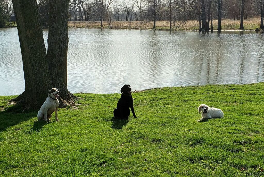 Three dogs in front of a lake