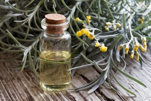 curry plant essential oil